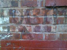 moss graffiti 5