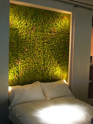 graffiti-moss-in-the-bedroom