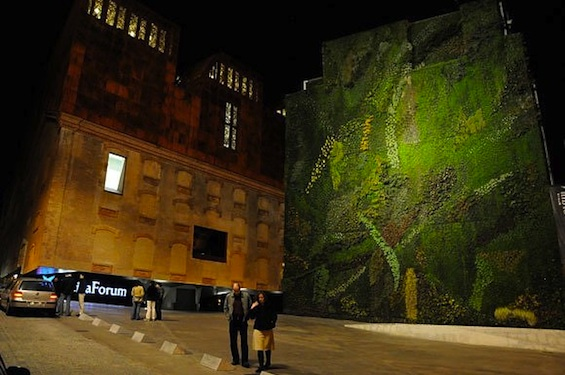 huge-moss-graffiti-wall
